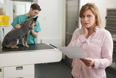 ペット保険選びのポイントは?おすすめの選択基準のサムネイル画像