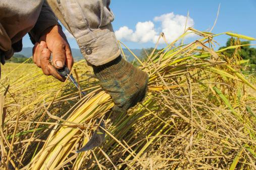 """農業の""""6次産業化""""の資金調達への展開も―SMBCの「食・農評価融資」が始動のサムネイル画像"""