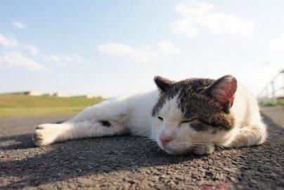 眠りのプロが厳選したお勧め快眠グッズのサムネイル画像