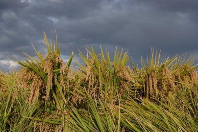 冷夏で「好影響を受ける企業、悪影響を受ける企業」のサムネイル画像