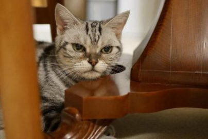 ネコに学ぶ悩まない生き方のサムネイル画像