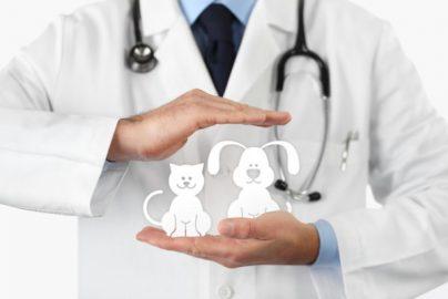 ペット保険収入 初の100億円超え 小さな記事ですが・・・のサムネイル画像