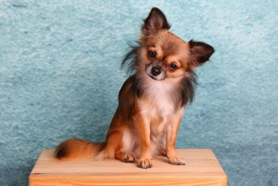 ペット保険って本当に必要?最近人気のペット保険を紹介のサムネイル画像