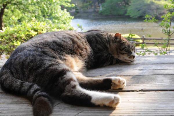 猫ブーム,浮世絵