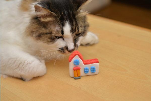 猫と暮らせる住まい
