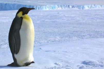 極寒の地が熱い!? 20○○年に南極大陸の地価上昇?のサムネイル画像