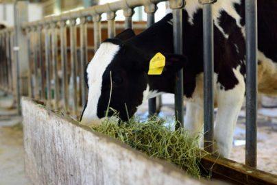 畜産飼料価格1割引き下げ 売上高減も利益増加の可能性のサムネイル画像