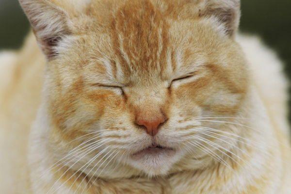 ペットも長寿命化、自分が死んだらペットはどうなる? 注目の信託サービス