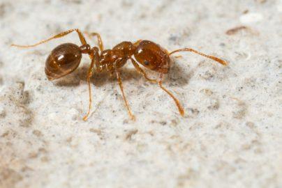 ヒアリで注目、「虫対策」関連5銘柄のサムネイル画像